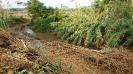 Pulizia argine fiume-2